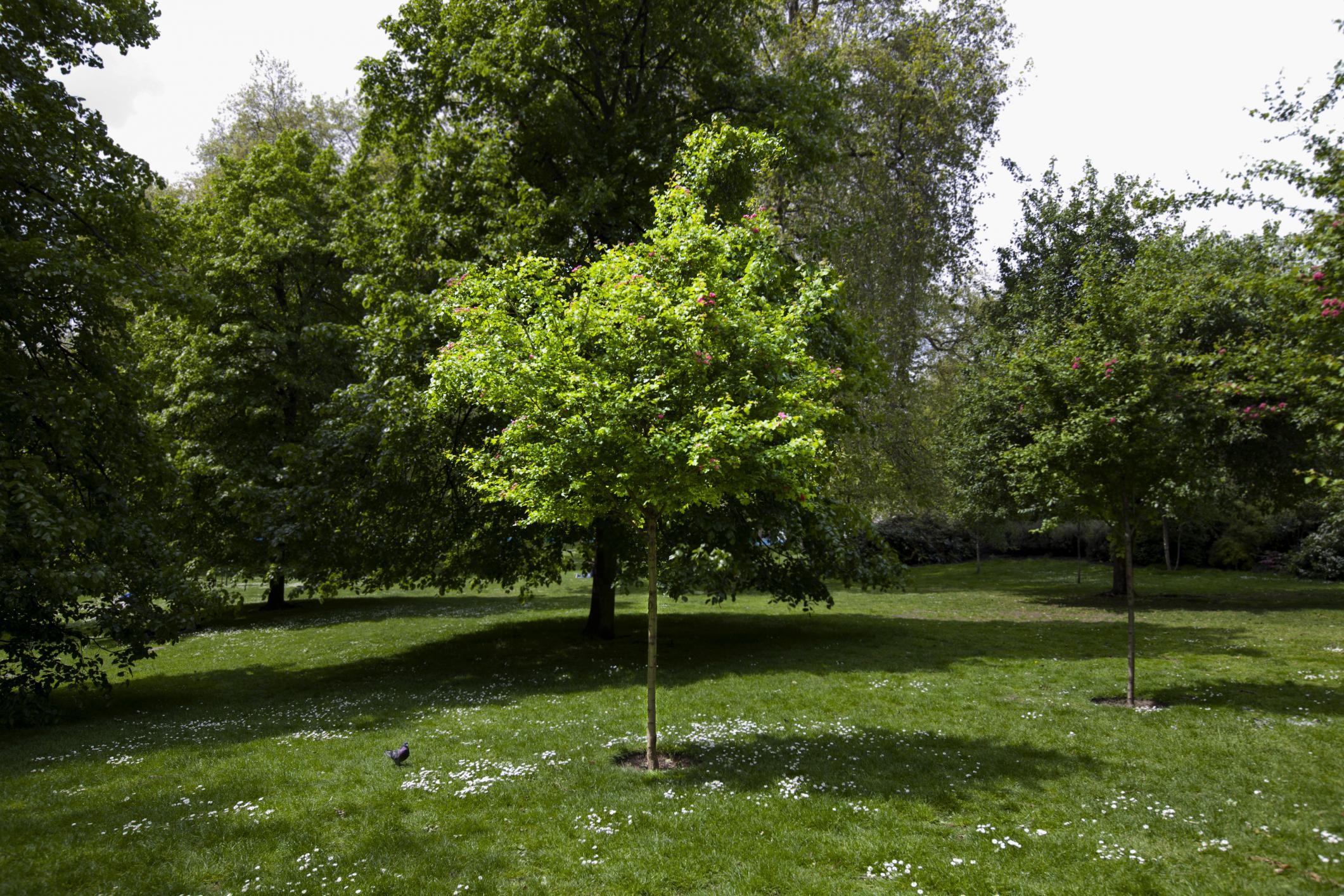 (c) Treeservicementorohio.net