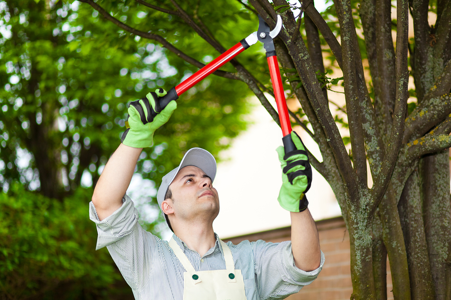 Tree pruning Mentor Ohio