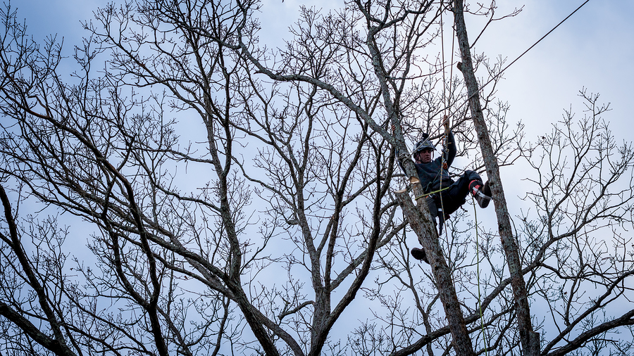 tree trimming Mentor