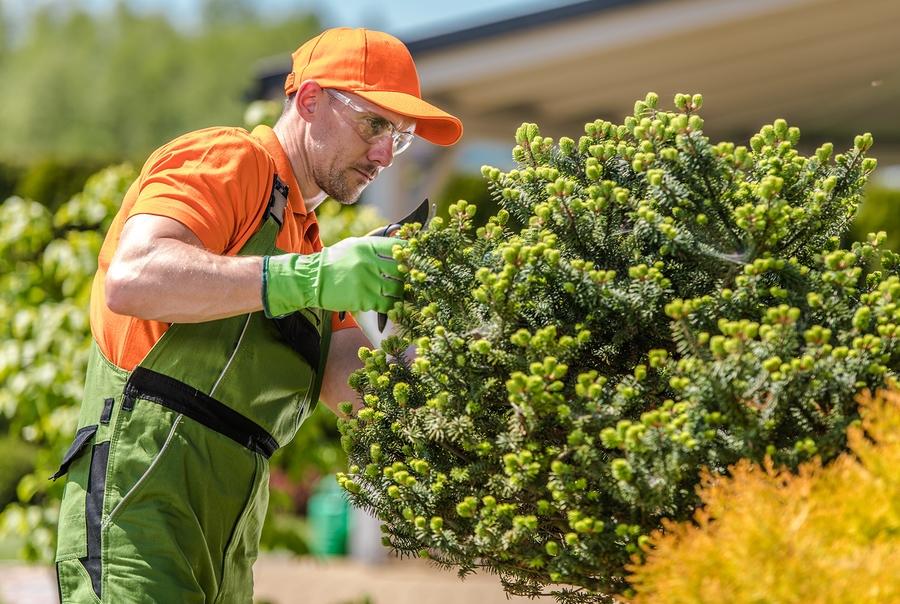 Tree Trimming Mentor Ohio