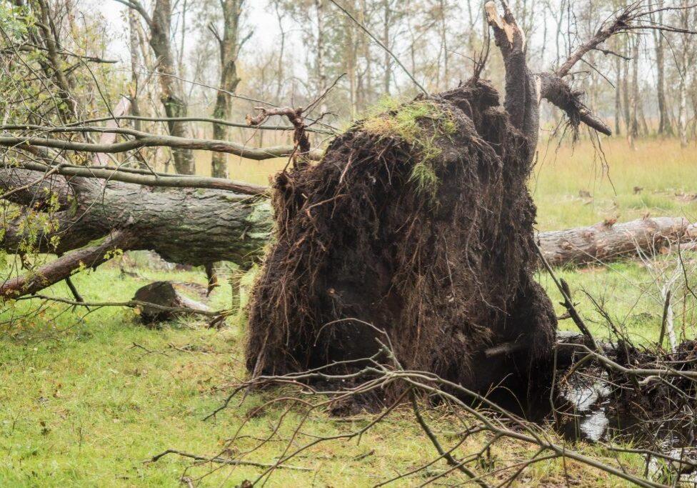 Emergency Tree Service Mentor